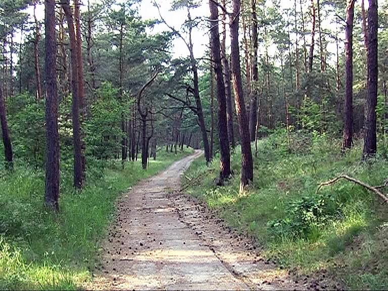 Name:  Waldweg.jpg Hits: 265 Größe:  318.7 KB