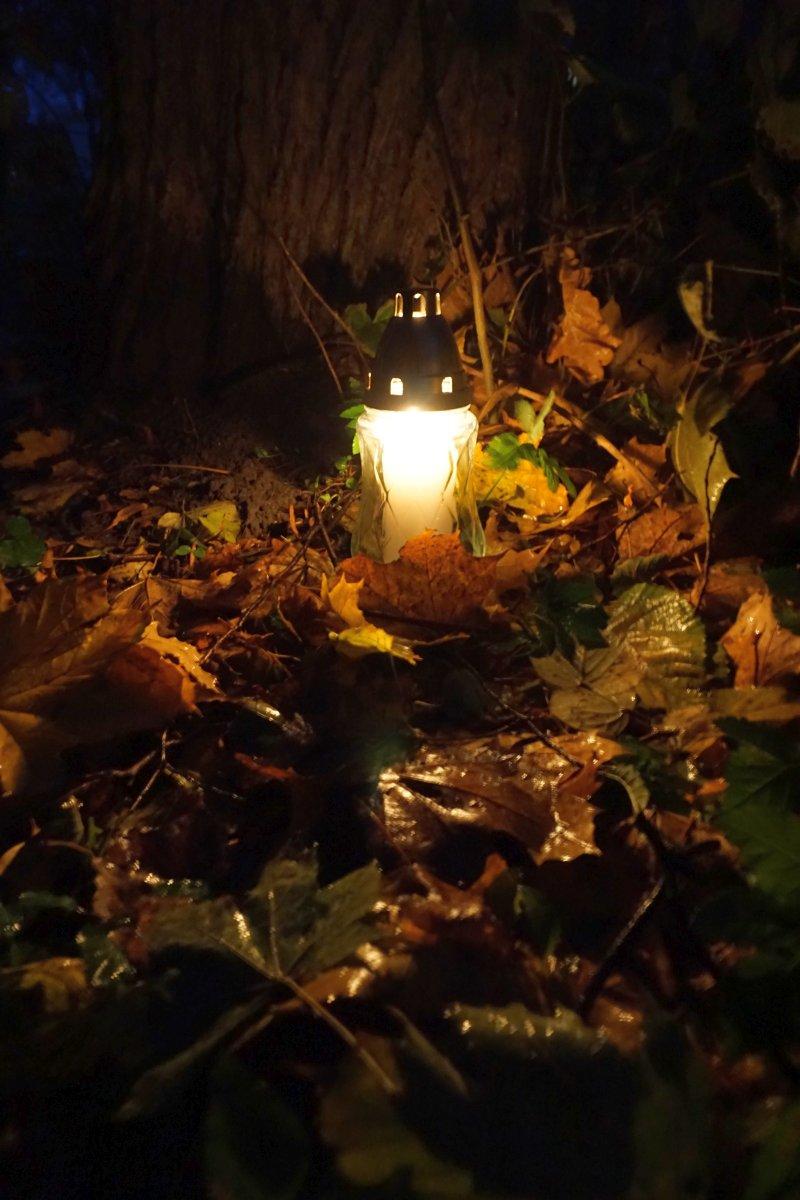 Name:  171102 SA612409 Schoenbaum Friedhof-Park.jpg Hits: 304 Größe:  173.7 KB