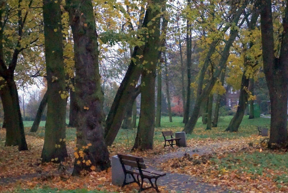 Name:  161101 SA607315 Schoenbaum Friedhof.jpg Hits: 325 Größe:  223.7 KB