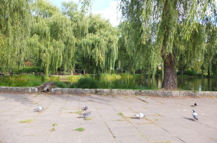 Name:  dscf4218-Orunia Park.jpg Hits: 414 Größe:  193.6 KB